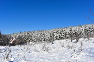 Woods in Bulgaria